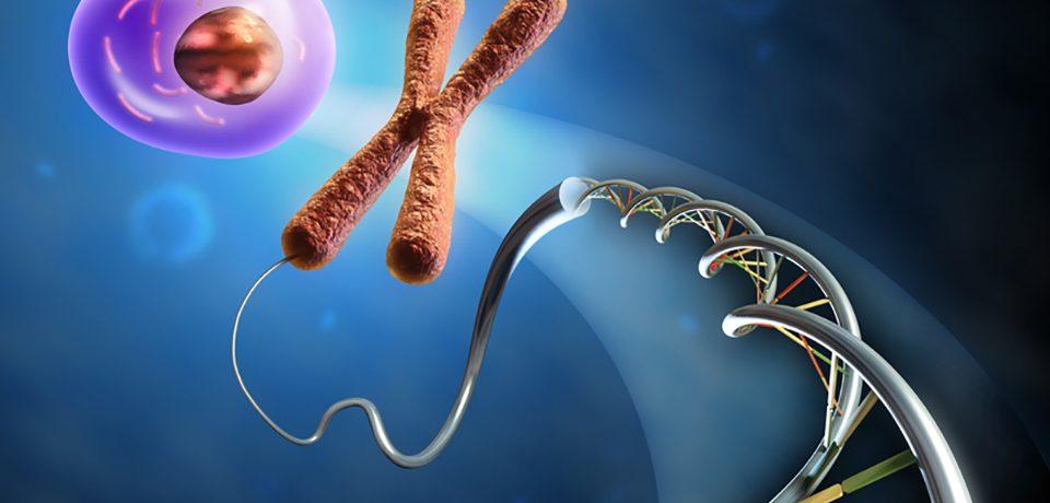 Как рождаются новые клетки мозга