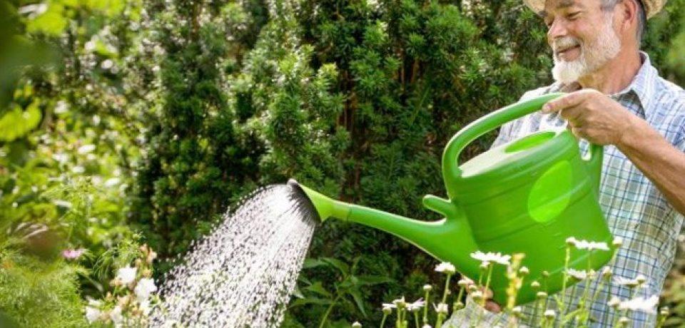 Гарденотерапия: лечение болезней в огороде