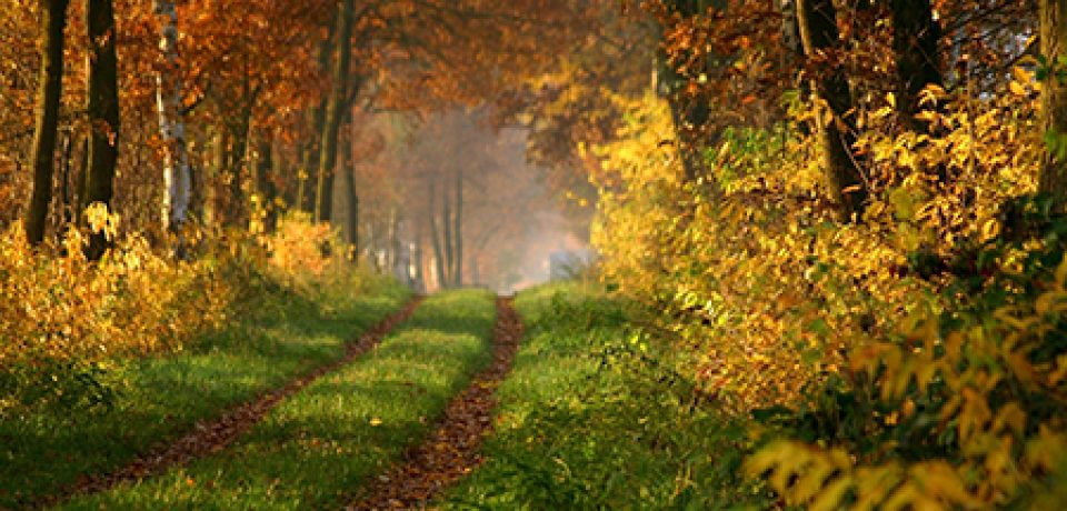 Что такое ландшафтная арт-терапия?