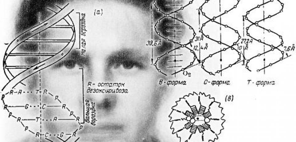 Что содержится в ДНК русского человека