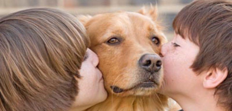 Что говорит наука о пользе домашних животных и любви к ним