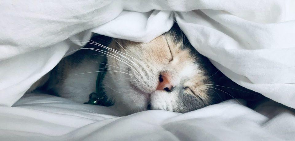 Простые способы быстрее заснуть