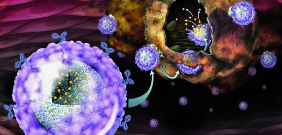 Наночастицы пробуждают иммунные клетки для борьбы с раком