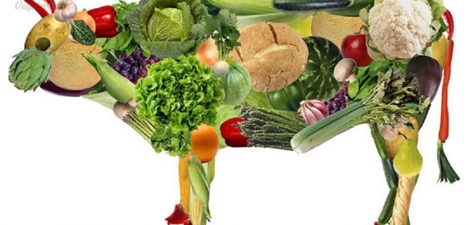 О плюсах и минусах вегетарианства