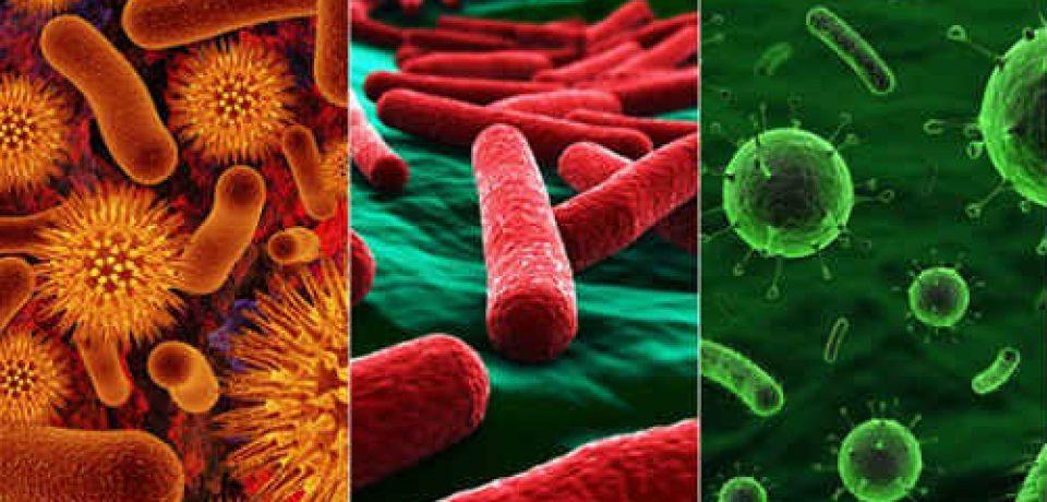 Как воспаления влияют на микрофлору кишечника