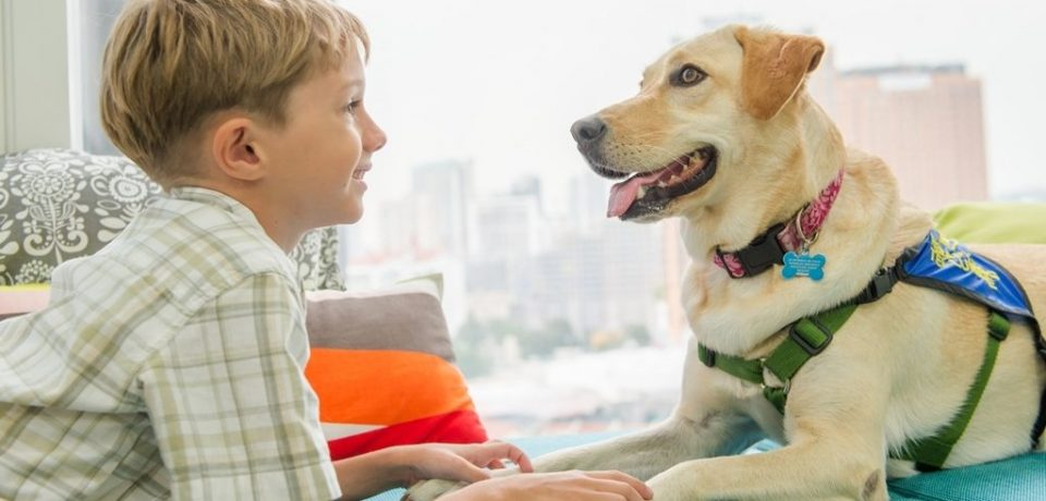 Влияние животных на здоровье человека